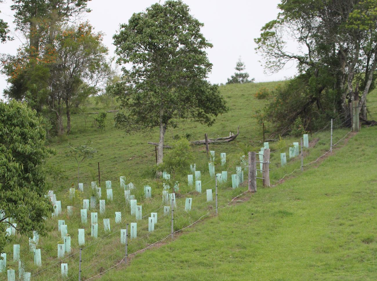 Connecting Vegetation