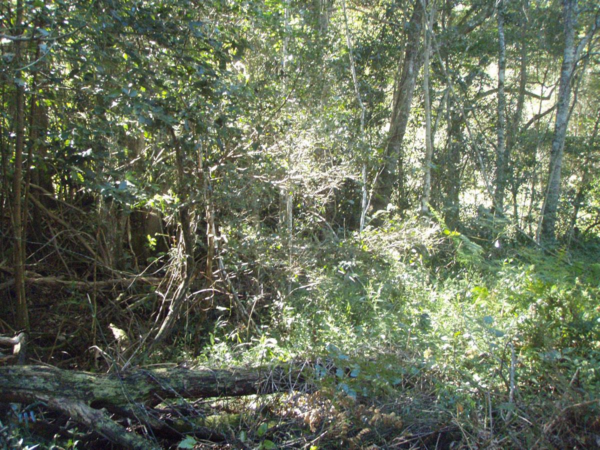 moggill-creek-catchment